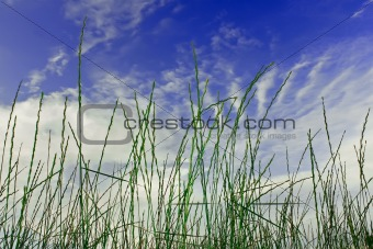 Cereals on the blue sky background