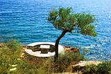 Olive tree near the sea