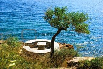 Olive tree near the sea