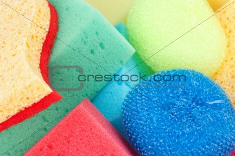 sponges close up
