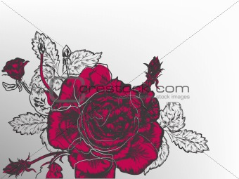 Retro  red rose graphic