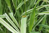 Gentle grasshopper