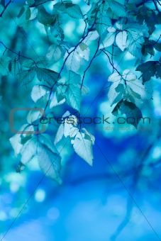 blue leaves