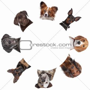 group of dog portraits around a circle