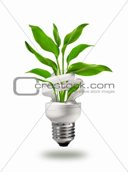 Green energy saving lamp