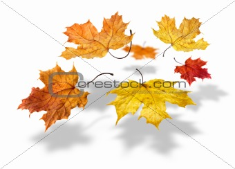 Colorful autumn maple leaves falling on white background