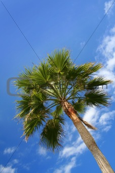 Green palm blue sky