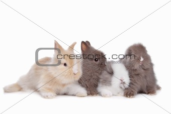four young rabbits in a row