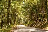 Asphalt road in Woods, under bright sunlight