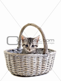 Adorable little kitten on white background