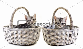 Adorable little kittens on white background