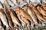 Stock fish