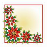 Poinsettia - Noche Buena Flower