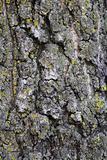Mossy Oak Bark Background