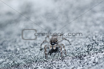 gray white jump spider on the wall