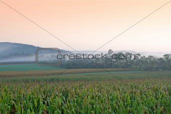 Foggy Sunrise on Cornfield