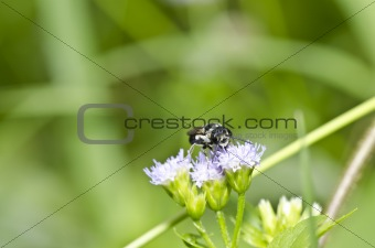bee on flower in the garden