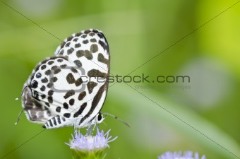 white butterfly in garden