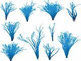 Fantasy tree's
