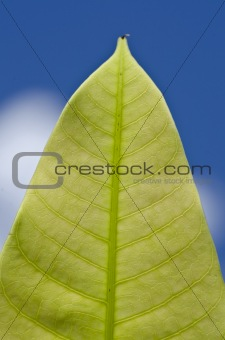 green leaf and blue sky