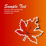 Abstract maple background, vector