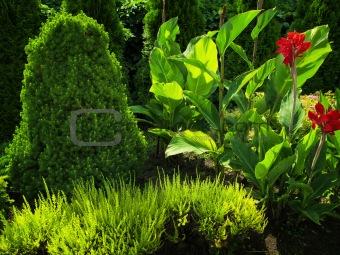 summer flower garden