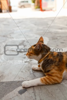 Greek cat in an alley