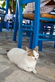 Greek cat in restaurant