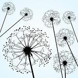 dandelions pale blue