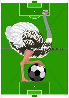 Ostrich with a soccer ball