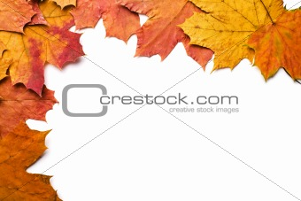 dry autumn leaves isolated