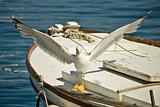 seagull flown away from boat