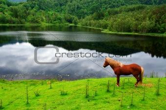 A stallion watching his kingdom