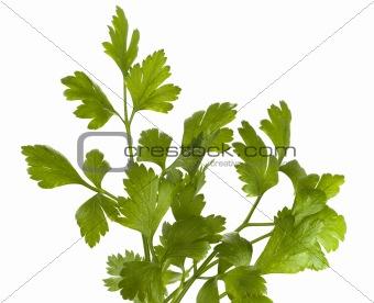 organic parsley italian