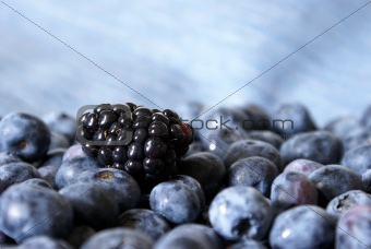Blackberry on Blueberries