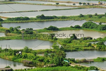 Rice terrace landscape in China