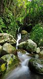 Hidden rain forest waterfall with lush foliage and mossy rocks