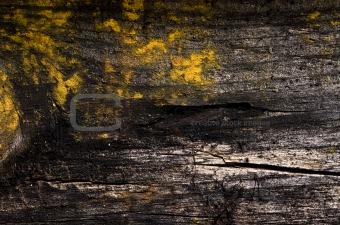 old grung wood wall