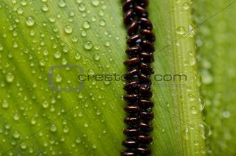 fresh bug egg in green nature
