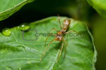 ant spider on green leaf