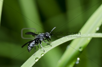 black wasp in green nature