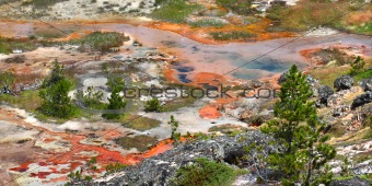 Artist Paint Pots - Yellowstone