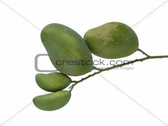 green mango  set