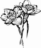 flowers of narcissus