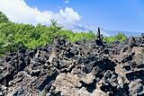 lava rocks close up