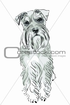 vector Miniature Schnauzer dog