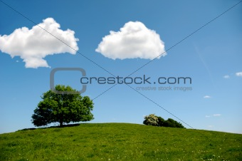 Tree on hill with clouds