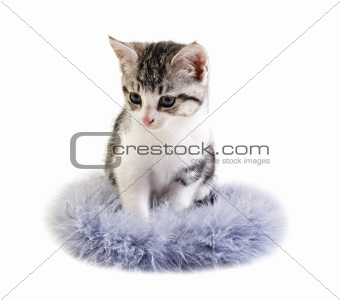 Adorable little kitten on white background with space for text