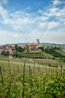 Vineyards around a country town