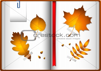 Autumn leaves in a notebook